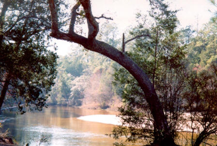 scenic view of blackwater state park near Milton Florida