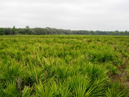 dry prairie founnd in central Florida