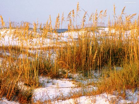 Florida dunes, along the coast of Florida