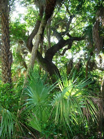 coastal hammocks found in the state of Florida