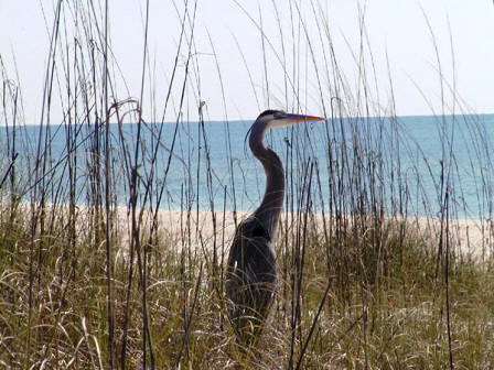 wildlife abounds on St George Island in Florida