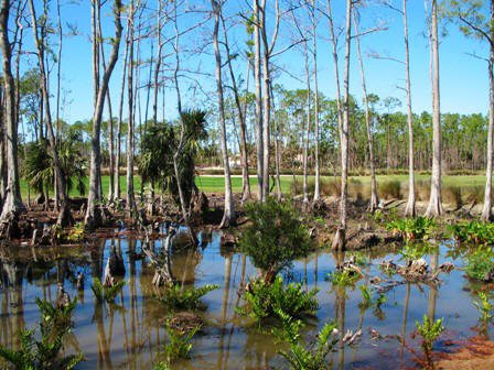 Florida swampland near Naples Florida