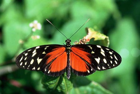 beautiful  florida butterfly in Floridian Nature