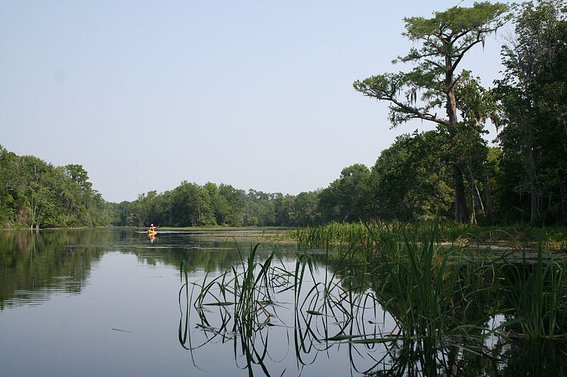 wakulla county is a beautiful nature spot in north Florida