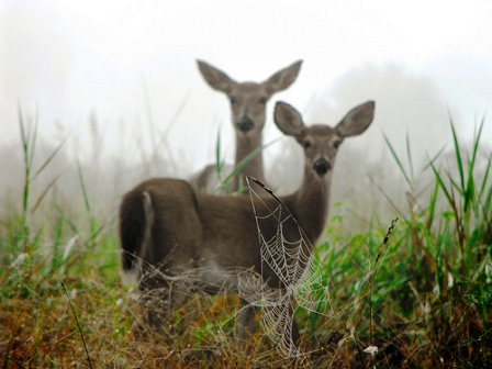 deer and other wildlife abound in Paynes Prairie Nature Preserve