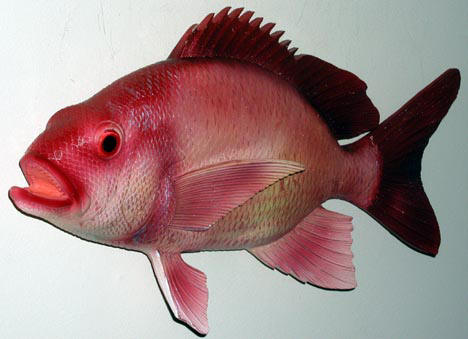 red snapper found in deep waters off the coast of Florida